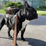louis vuitton dog backpack