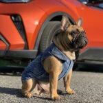 blue dog vest