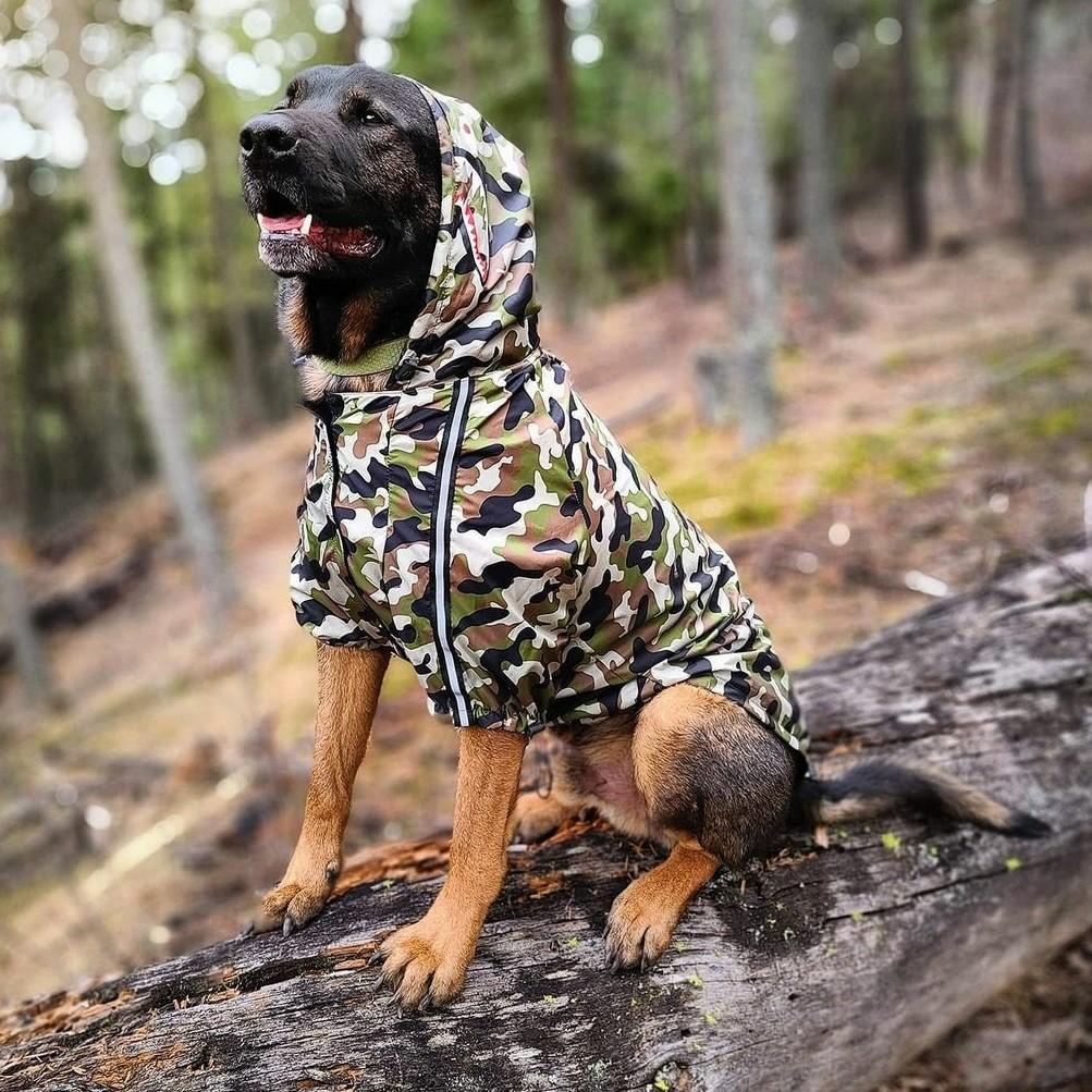 bape dog jacket