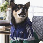 hypebeast dog clothes