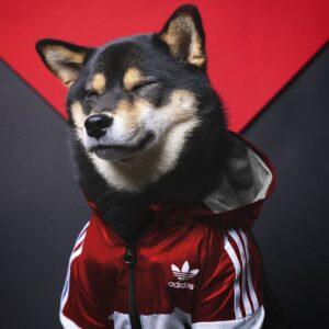 adidas dog jacket