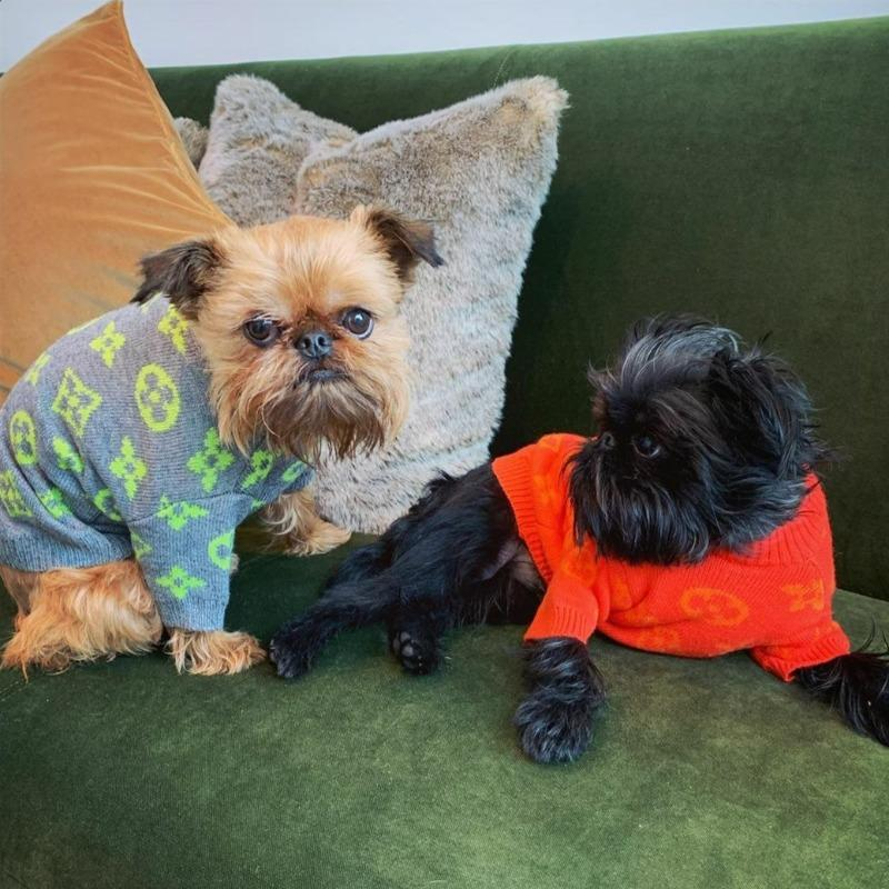 louis vuitton dog sweaters