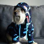 camouflage dog hoodie