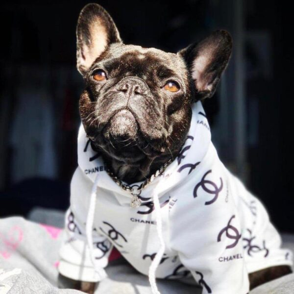 chanel dog hoodie