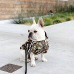 bape dog clothing