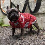 french bulldog raincoat