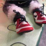 dog sneakers jordans