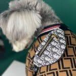designer dog handbag