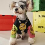 necklace for dogs