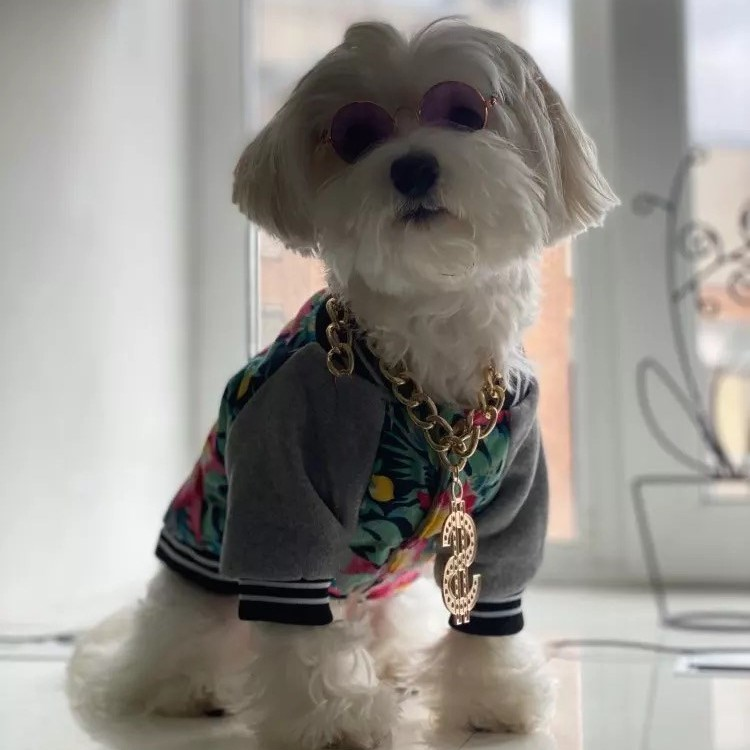 dog necklace chain