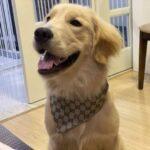 designer dog bandana