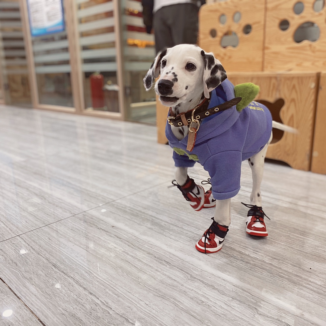 dog shoes for walking