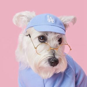 dog caps