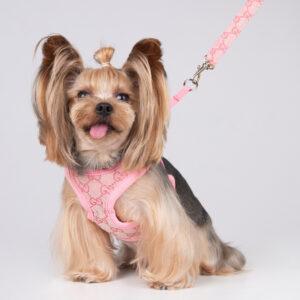 cute dog harness